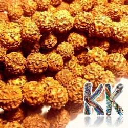 Rudraksha korálky - ∅ 12 mm