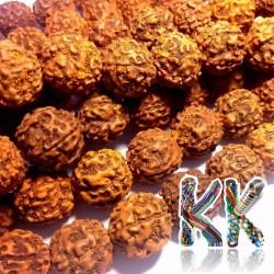 Rudraksha korálky - ∅ 14 mm
