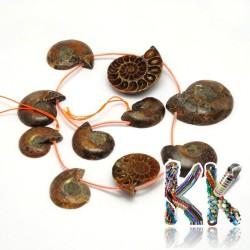 Přírodní zkamenělý amonit - 32-44 x 25-35 x 6-10 mm